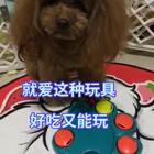 #汪星人##宠物#卖力找好吃的😏😏,鸡肉粒 鸭肉粒放里面刚刚好😋😋http://item.taobao.com/item.htm?id=560104715895 莎拉麻麻手工宠物零食!