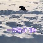 #宠物#雪山飞狗啊,这背影的POSE是在拉还是尿?应该是尿吧@大大大大大奶油
