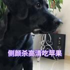#宠物#侧颜杀吃苹果高清视频@大大大大大奶油