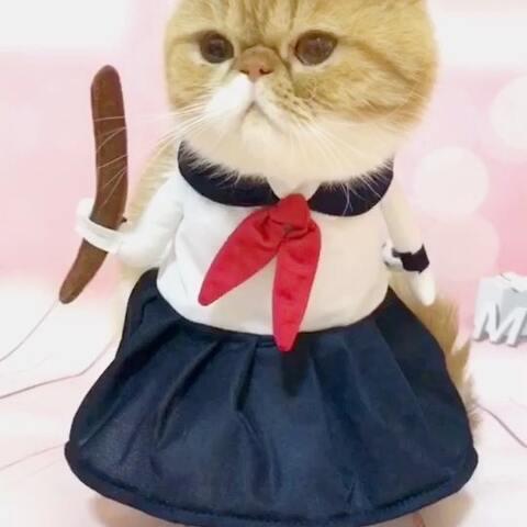 【猫咪跳芭蕾✨🐾✨美拍】🐈憨萌的学生妹儿yomi,上学🎒要...