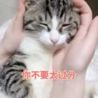 """团子🐱:""""劳资刚醒懒得理你,你还蹬鼻子上脸了!?""""#宠物##精选##猫咪#"""