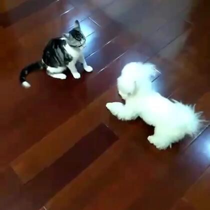 对猫来说,狗子简直360度欠打