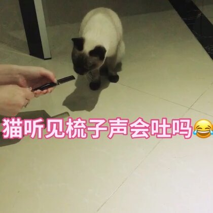 #宠物##猫听见梳子声#我家kiki听见梳子声就不行了😂😂