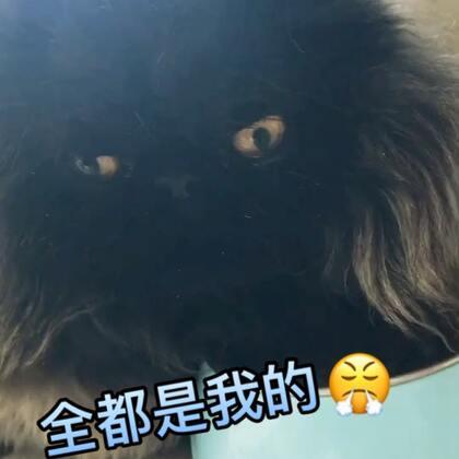 胖子!是有理由的🤤🤤🤣#宠物##喵星人的日常##搞笑宠物#我主人的店铺:https://shop572297338.m.taobao.com/?