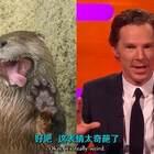 一直有粉丝说Benedict像水獭, 本尼这就一次满足粉丝的愿望现场扮演水獭,玩起了水獭模仿秀!每一个表情都可以收录做表情包了!旁边的德普一脸懵逼了。。😂