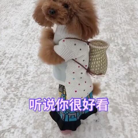 【酷酷的汪-杨杨美拍】喜欢杨杨的朋友,给个❤吧
