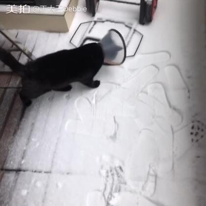 爹狗猫生第一次看雪!嗨呀这天咋下雪了呢