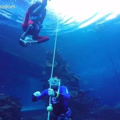 初级自由潜水课程平静水域训练回顾!#自由潜水##运动##水下摄影#