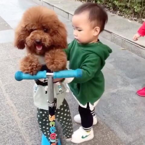 【李小权的果冻呢?美拍】汪星人上了小女孩的车把人家急的