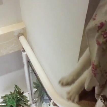 每次下楼梯,都是这样吓我的🧐#宠物#