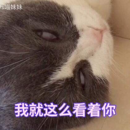 🙄妹的白眼😂久违了😏这是一个惊悚片👻#宠物##家有宠物爱翻白眼##宠物奇葩睡姿#