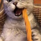 #宠物#这是啥呀……这也太好吃啦,这辈子也没吃过这么好吃的东西……😂