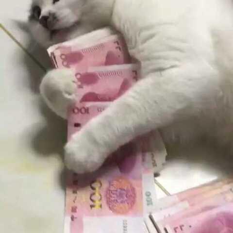 【丽娜🍁美拍】变了心的猫