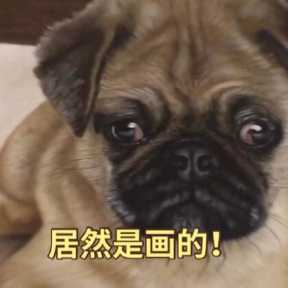 这3D小狗简直太逼真了😍😍😍