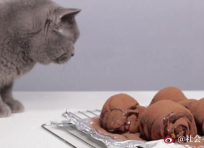 这款限量版猫毛脏脏包,你绝对没吃过