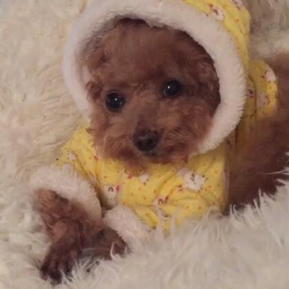 #宠物奇葩睡姿#-💖公主-甜心💖-公主:真桑心😔,做个美梦也被麻咪搅和了呗😓(哈哈,小丫头👸🏼,还在回味呢😅)#宠物##萌娃小吃货#