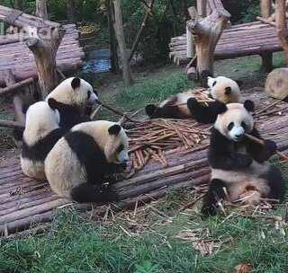 #萌团子日常#躺吃自助餐是什么样的体验?