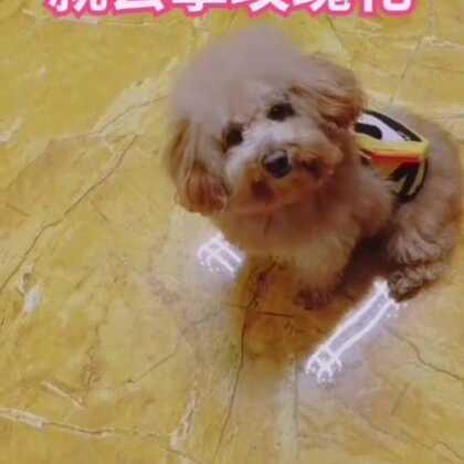 😂😂涂涂大概是恋爱了吧#宠物##精选##汪星人#训狗零食http://h5.m.taobao.com/awp/core/detail.htm?id=556731428991