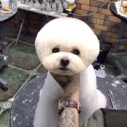 大眼萌😘😘😘#宠物美容师的日常##萌宠乐园#