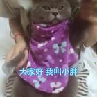 #bingbian病变# 嗨 大家好 我叫小胖 我给大家跳舞💃啦~ #宠物# @喵喵儿的店