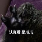 😍来来来 今天我们来撸这个黑爪爪🌚看我迪迪 爪~爪~开~fa~🌺#宠物##给宠物挠脚心##来晒小萌爪#