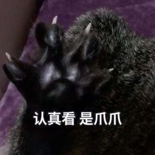 ?来来来 今天我们来撸这个黑爪爪?看我迪迪 爪~爪~开~fa~?#宠物##给宠物挠脚心##来晒小萌爪#