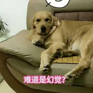 #宠物#???