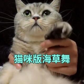 #宠物才艺秀##海草舞##猫咪#醉了醉了