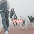 #宠物##萌宠巴哥##法斗#遛猪猪