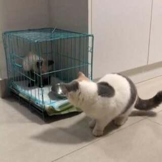 琉稣的美拍:两只猫的饭后v瘦脸运动会针打瘦脸牛肉怎样吃图片