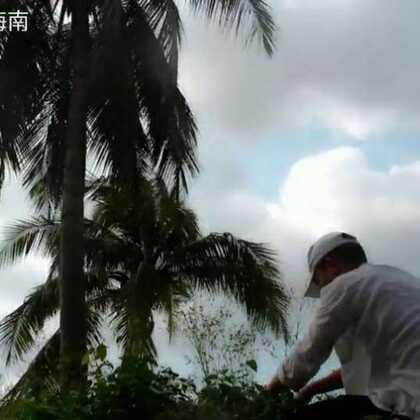 #美食#龙葵草#我要上热门@美拍小助手#海南三亚,这几天没点忙,没时间去拍,就先发了一个天晴时的库存,你们也开始忙着过年了吗?