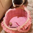 嘘…🤐本喵妹有个秘密藏宝阁📿🔮这个秘密谁都不知道#宠物##宠物藏东西##来晒小萌爪#