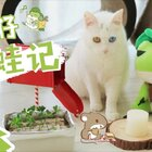 timi:我的蛙儿子怎么还没回来?!!(✨关注并转赞评,2月20号抽两位送出青蛙公仔玩偶✨) #宠物##mimo##青蛙旅行#