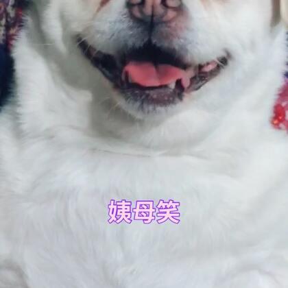 豆丁露出姨母笑,哈哈哈#宠物#
