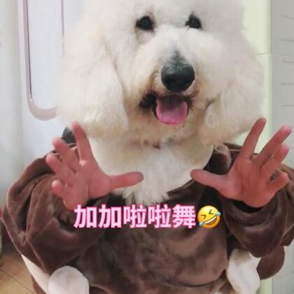 穿帮镜头太多,纯属好玩😂#加加啦啦舞##宠物##精选#@宠物频道官方账号 @美拍小助手