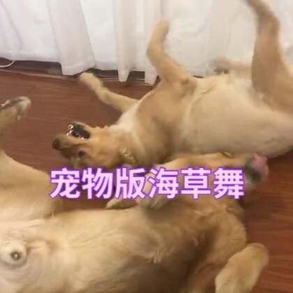 宠物海草舞#宠物##海草舞#