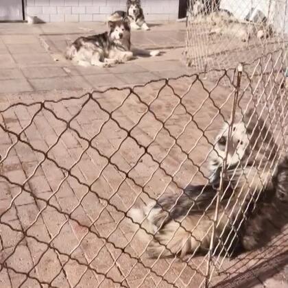 #宠物##汪星人#都在晒太阳,被我打扰了哈哈