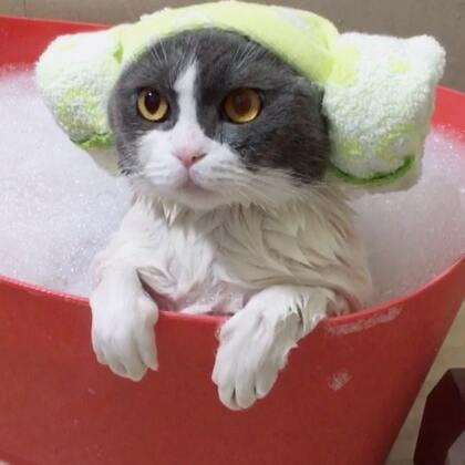 🌚稳住!别羡慕😍洗澡乖的不行的别人家的猫又双叒叕来了part.1🤣#宠物##给宠物洗澡##喵汪洗澡记#