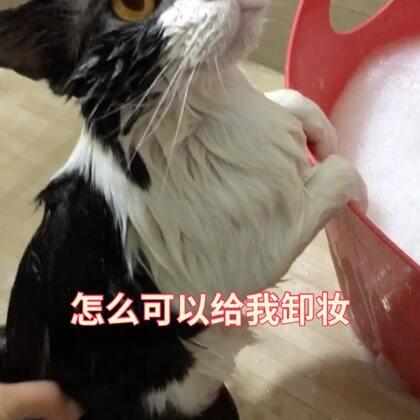🌚稳住!别羡慕😍洗澡乖的不行的别人家的猫又双叒叕来了part.2🤣#宠物##给宠物洗澡##喵汪洗澡记#