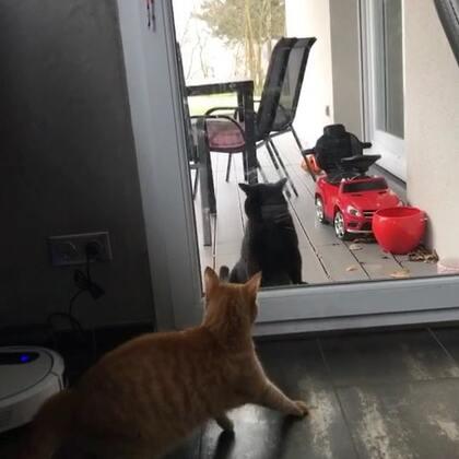早上家门口来了一只黑猫,不知是敌是友😉反正我家miaomiao不是吃素滴#宠物##海外生活##我的猫咪是逗比#