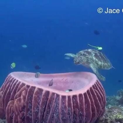 这海龟太萌了,打完哈欠后还舒服的哼哼两声。【PS: 转发优酷视频】