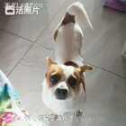 #宠物狗狗#
