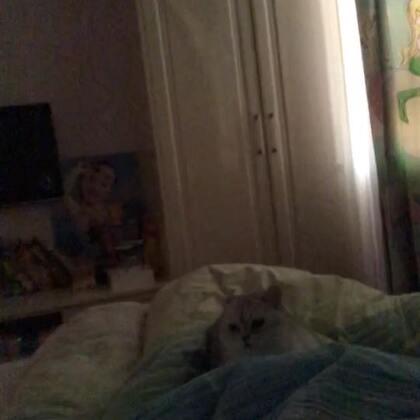 #宠物#你睡我身上也就算了 你一直掏掏掏掏掏几个意思?