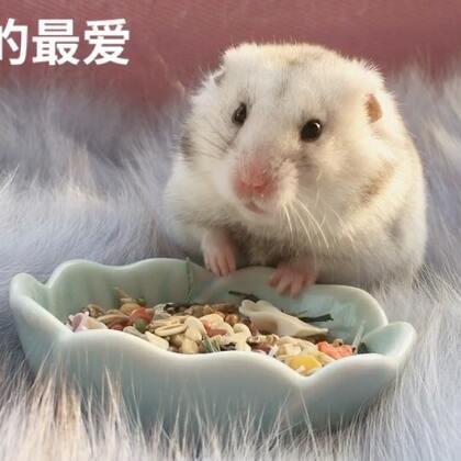 #宠物##独特萌宠##仓鼠#哎呀,没有我爱吃的啦!拿走!