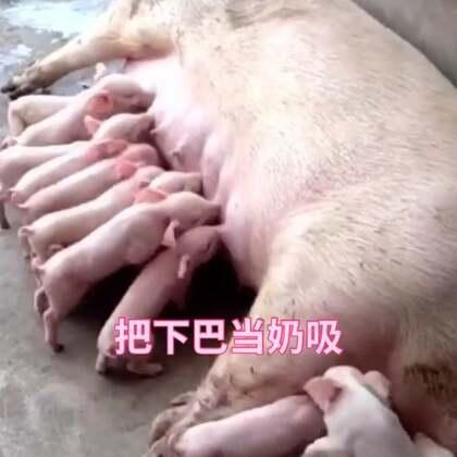 哈哈这屁股性感吗?过年就选哪个最妖娆的#精选##性感猪#