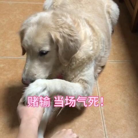 【林华凌Ring美拍】哈哈哈哈哈哈哈哈哈哈哈哈傻狗#...