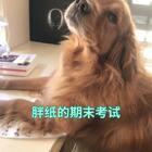 你们的期末考试还好吗😂😂😂#我让你给我一个交代##精选##宠物#@宠物频道官方账号 @美拍小助手