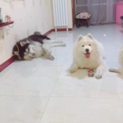 #画沙#一群懒娃娃#宠物#