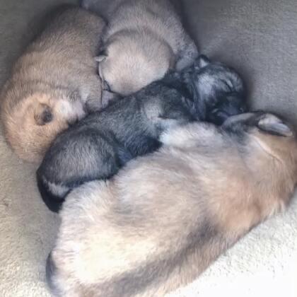 小狗狗们#宠物#