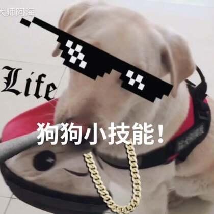 想让你家狗狗🐶成为你呼风唤雨的狗腿子吗?那快来关注我!!不定期分享训练小知识🐶🐶🐶#宠物##狗狗技能##训练狗狗##训犬师#